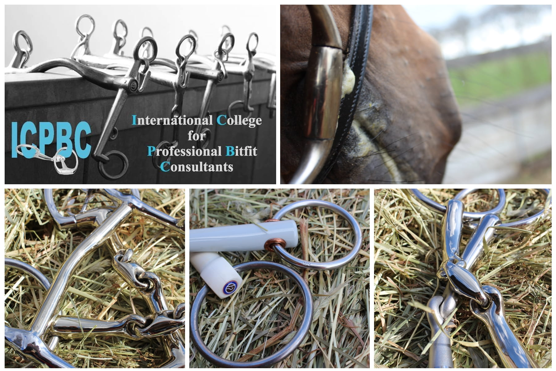 ICPBC bitfitconsultant hoofdstel Bridle2fit